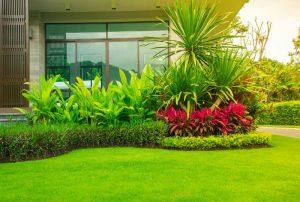 انشاء وصيانة الحدائق في الشارقة