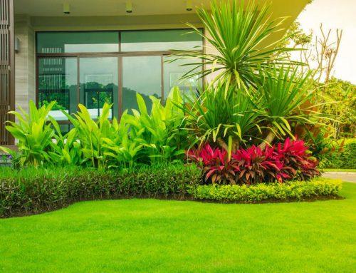 انشاء وصيانة الحدائق في الشارقة |0507687896|صيانة حدائق