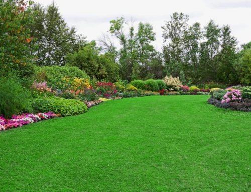 تنسيق الحدائق المنزلية الشارقة |0507687896|تنسيق حدائق